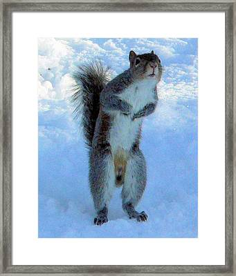 Peeking Squirrel Framed Print by Denise Jenks