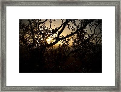 Peeking Sun Framed Print by Mike Hill