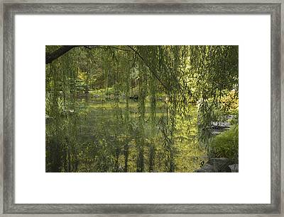 Peeking Through The Willows Framed Print by Linda Geiger