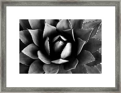 Peel It Back Framed Print by Steve Russell