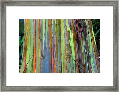 Framed Print featuring the photograph Peeling Bark- St Lucia. by Chester Williams