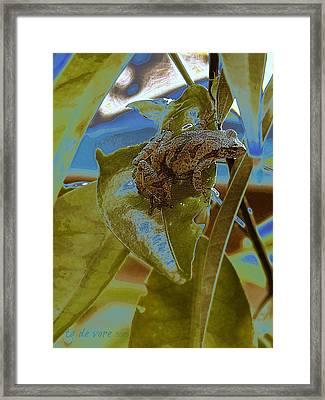 Peeper Framed Print by Tg Devore