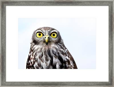 Peepers Framed Print