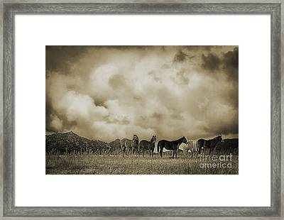 Peeples Valley Horses In Sepia Framed Print by Priscilla Burgers
