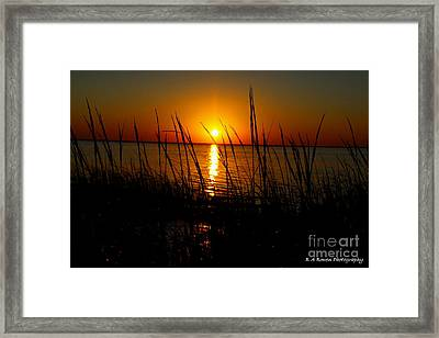Peering Through The Sea Oats Framed Print