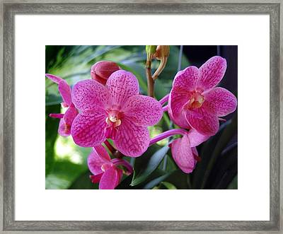 Peggy Foo Framed Print by Suzanne Krueger