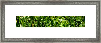 Pei Grass - Top Framed Print by John Julio