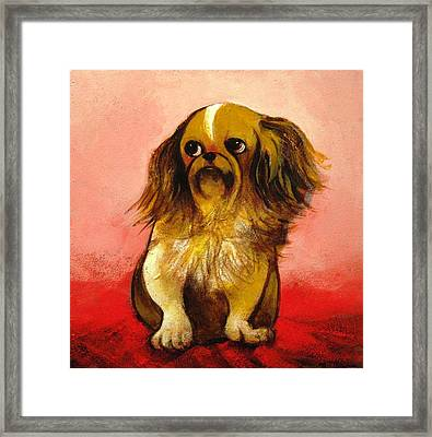 Pekinese Framed Print by Christine McGinnis