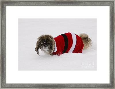 Pekingese Dog In Santa Outfit Framed Print by Kenneth M. Highfill
