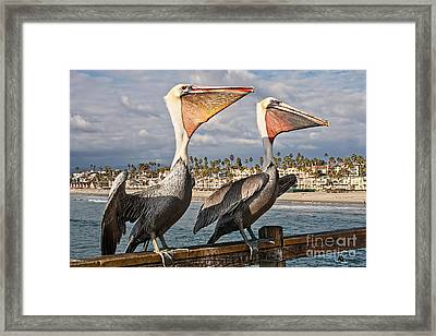 Pelican - A Happy Landing Framed Print