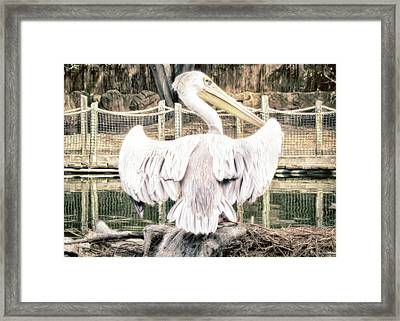 Framed Print featuring the photograph Pelican by Alison Frank