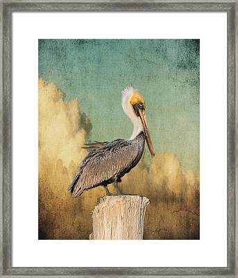 Pelican And Clouds Framed Print