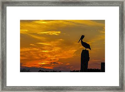 Pelican At Silver Lake Sunset Ocracoke Island Framed Print