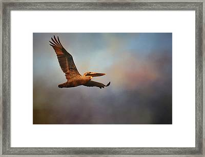 Pelican At Sunrise 2 Framed Print by Jai Johnson
