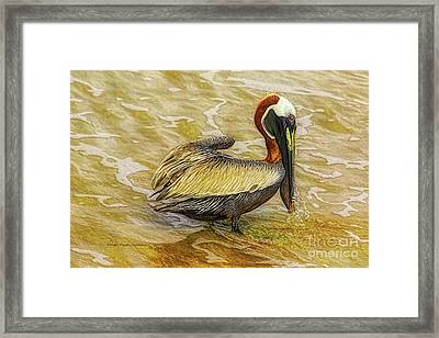 Pelican At The Beach Framed Print