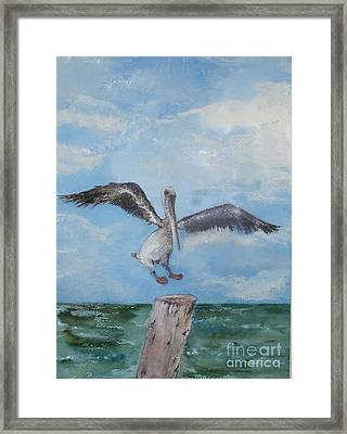 Framed Print featuring the painting Pelican by Sibby S