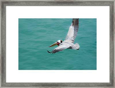 Pelican Beautiful Framed Print