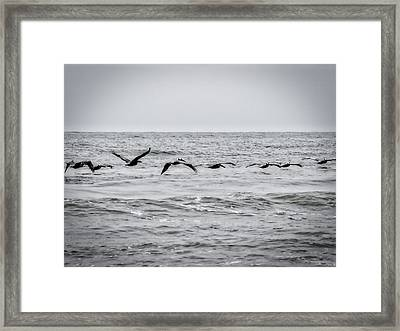 Pelican Black And White Framed Print