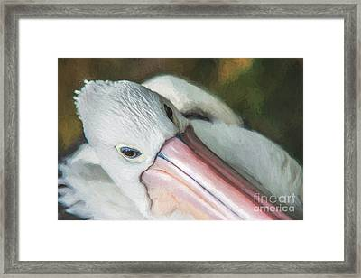Pelican Brief   Go6 Framed Print