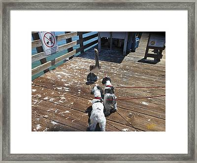 Pelican Cant Be Nice He Is A Pelicant Framed Print