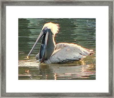 Pelican Dinner Framed Print