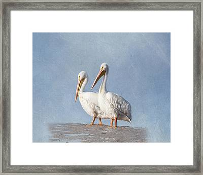 Framed Print featuring the photograph Pelican Duo by Kim Hojnacki