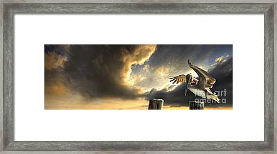 Pelican Evening Framed Print by Meirion Matthias