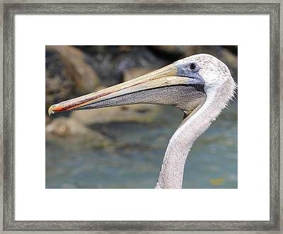 Pelican Face  That Only A Mother Could Love Framed Print
