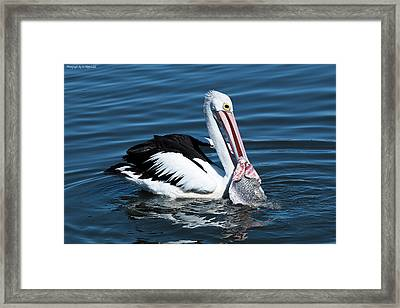 Pelican Fishing 6661 Framed Print