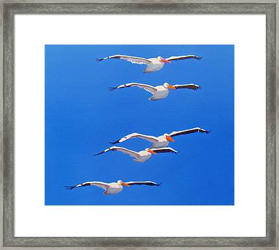 Pelican Friends Framed Print by Anne Marie Brown