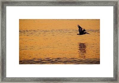 Pelican Glide Delray Beach Florida Framed Print by Lawrence S Richardson Jr
