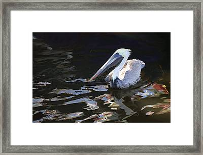 Pelican II Oil Painting Framed Print