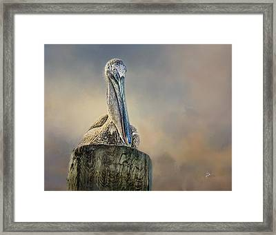 Pelican In Paradise Framed Print by TK Goforth