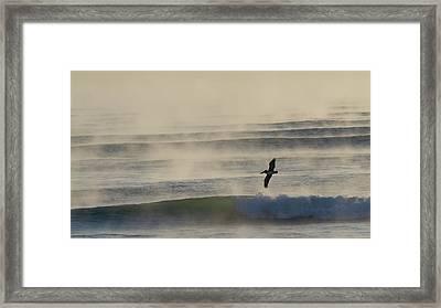 Pelican In Sea Smoke Framed Print