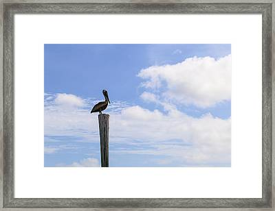 Pelican In The Clouds Framed Print