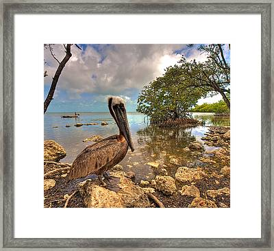 Pelican In The Florida Keys Framed Print