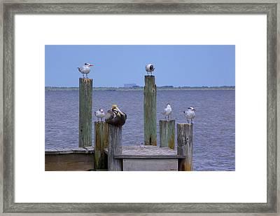Pelican Incognito Framed Print