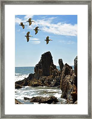 Pelican Inspiration Framed Print by Gwyn Newcombe