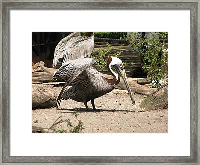 Framed Print featuring the photograph Pelican Island by Martha Ayotte