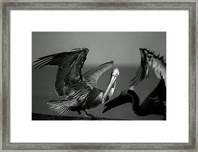 Framed Print featuring the photograph Pelican by Jane Melgaard