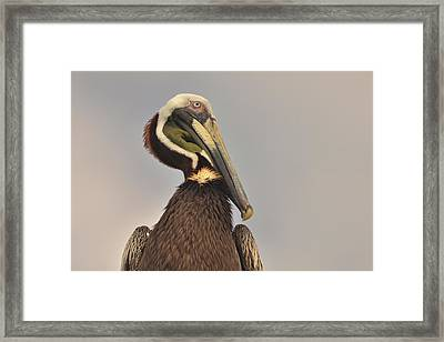 Pelican  Framed Print by Nancy Landry