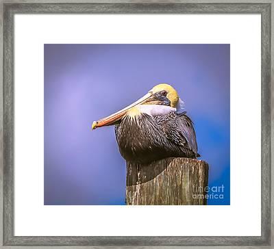 Pelican On Break Framed Print