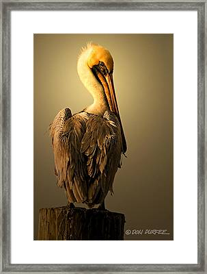 Pelican On Piling Framed Print by Don Durfee