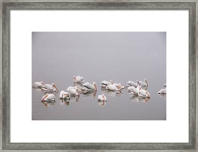 Framed Print featuring the photograph Pelicans On The Lake by Carolyn Dalessandro