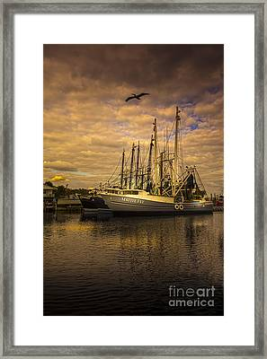 Pelican Over Mattie Fay Framed Print