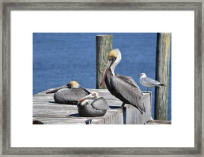 Pelican Pad With Gull Framed Print