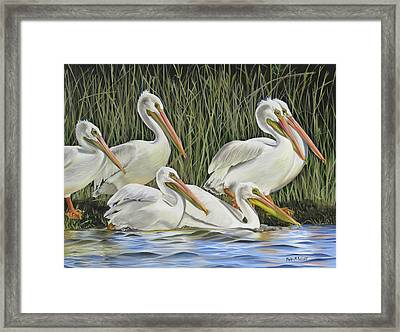 Pelican Parade Framed Print by Phyllis Beiser