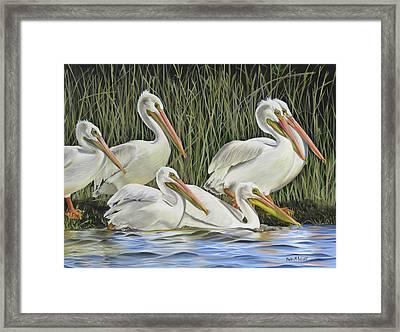 Pelican Parade Framed Print
