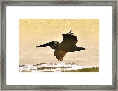 Pelican Patrol Framed Print