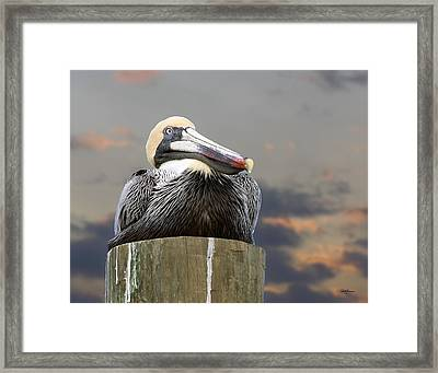 Pelican Perch Framed Print
